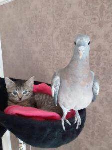 Kätzchen und Taube